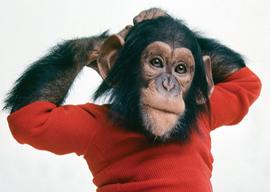 Chimp Bites Woman, Talks About It