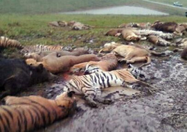 Dangerous Wild Animals Murdered LIVE on TV!