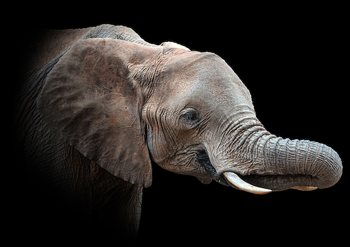 The Intersectional Elephant