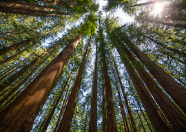 Redwood State Park, CA